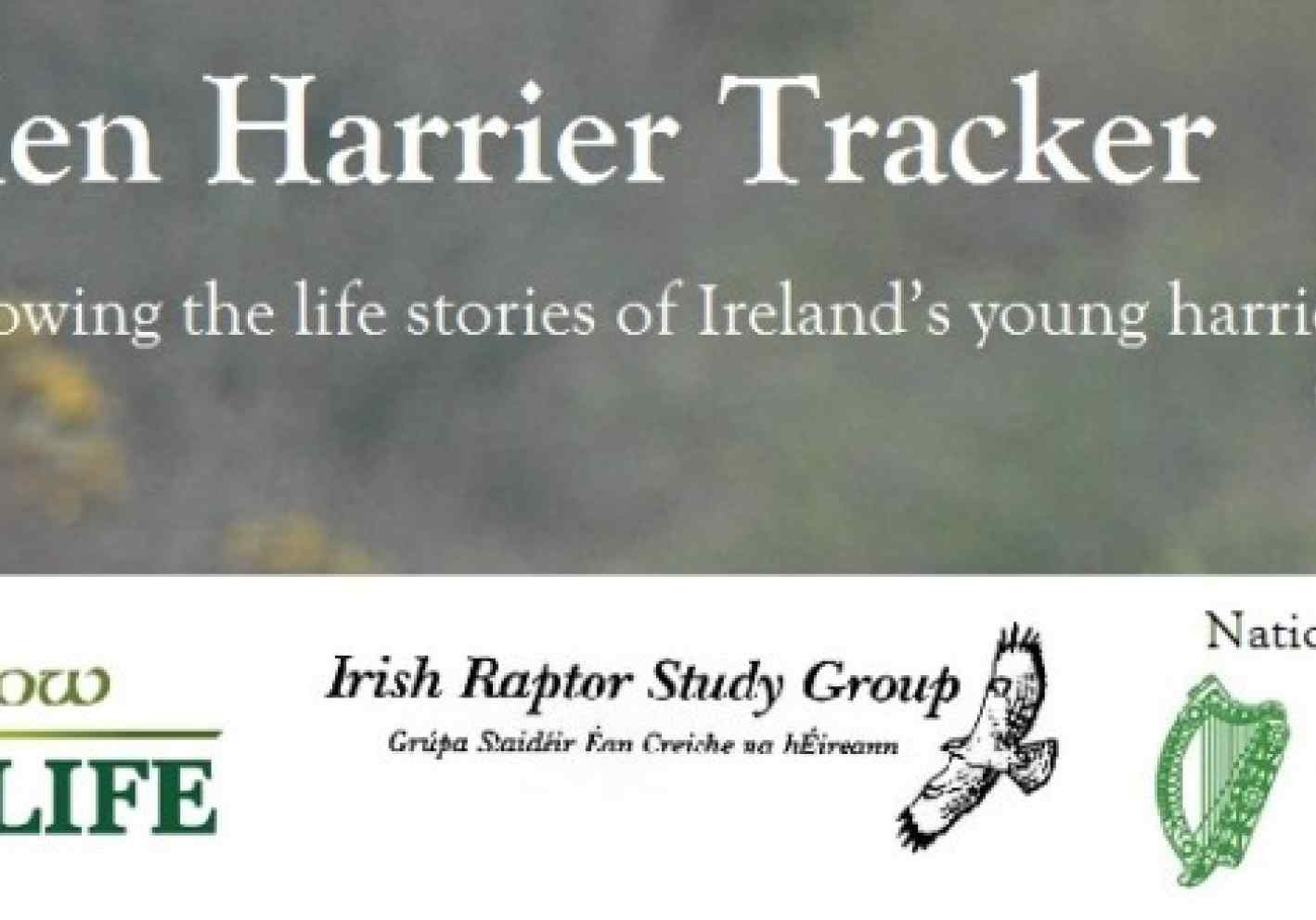 Hen Harrier Tracker