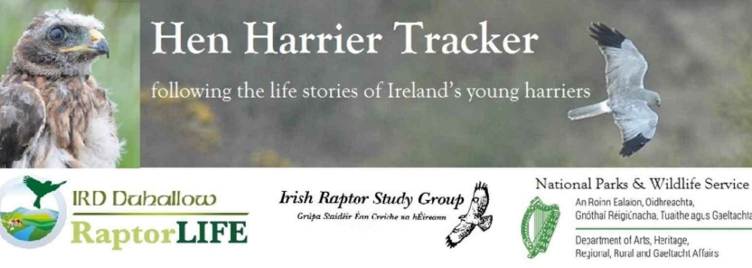 Hen Harrier Tracker
