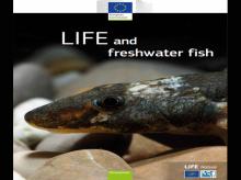 Freshwater Fish Report